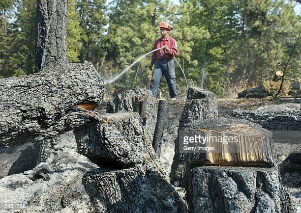 Stolo Nation firefighter hoses down hots spots along a fireguard August 26 2003 in the hills above Kelowna British Columbia Canada The Okanagan...