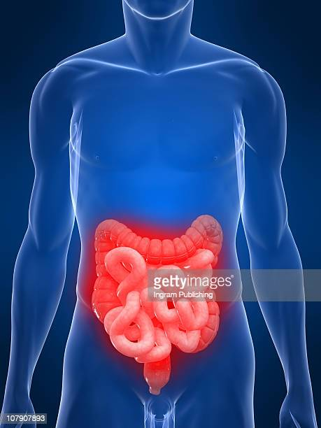 stomach ache - human intestine stock photos and pictures