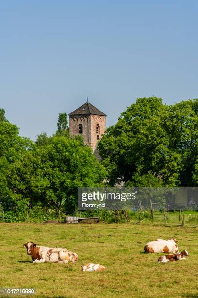 stompe toren or blunt tower in spaarnwoude - boek stock pictures, royalty-free photos & images