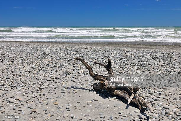Stone Beach with Wood Root
