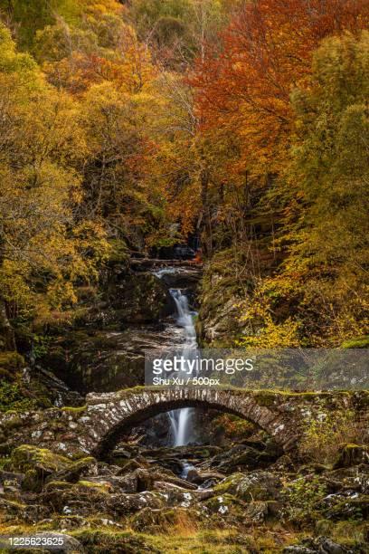 stone bridge and waterfall in autumn, aberfeldy, scotland, uk, perth and kinross, united kingdom - アバフェルディ ストックフォトと画像
