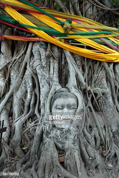 Stone Buddha Head Nestled in the Roots of a Tree in Wat Phra Mahathat. Ayuthaya, Thailand