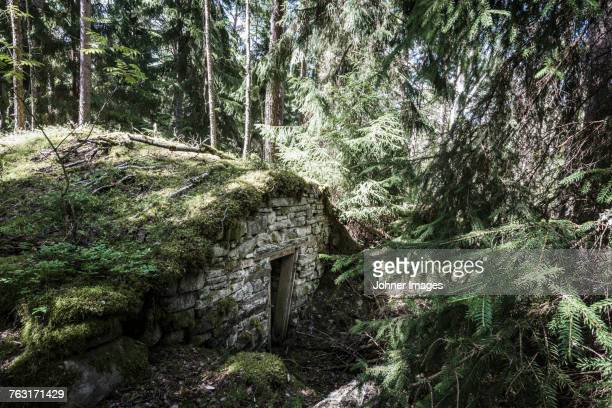 Stone building in forest