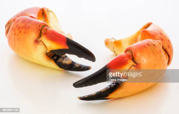 Stone crab claws on white background