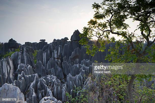 Stone Forest, Yunnan Province, China