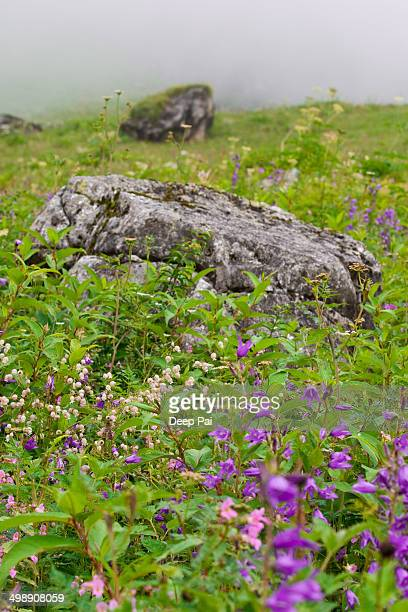 Stone Garden In the middle of Valley of Flowers