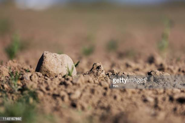 stone on a weeded field - erdreich stock-fotos und bilder