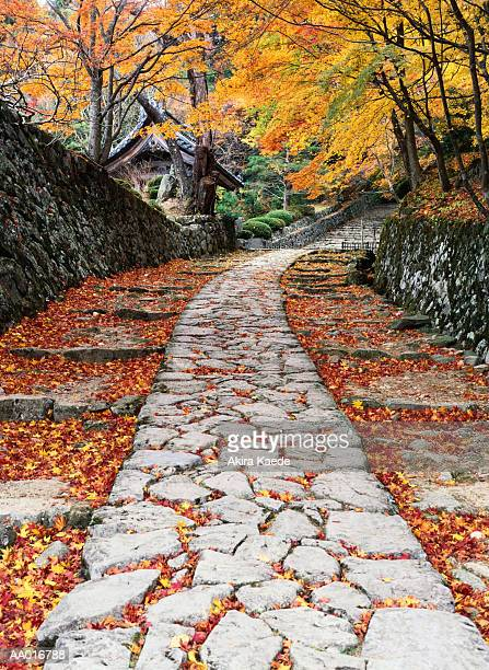 Stone path through forest, autumn