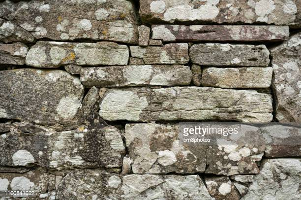 stone rock wall texture - fossil stock pictures, royalty-free photos & images