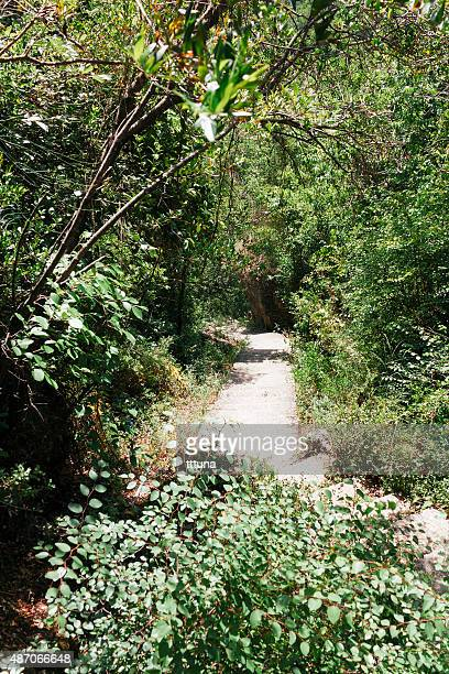 stone stairs in forest, tourism travel destination