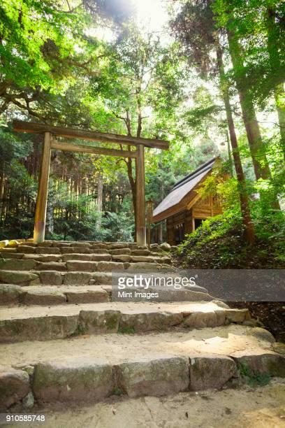 stone steps at shinto sakurai shrine, fukuoka, japan. - 日本の神社 ストックフォトと画像