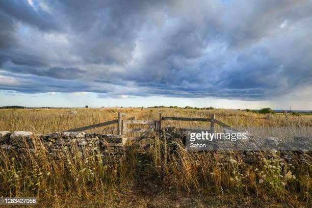stone wall and a gate in pasture with dramatic sky in summer - stone wall stock pictures, royalty-free photos & images