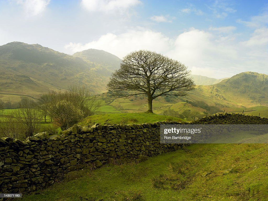 Stone wall in rural landscape : Stock Photo