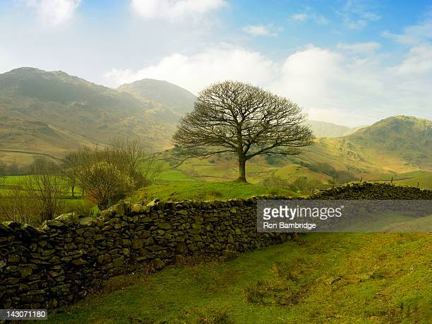 stone wall in rural landscape - stone wall stock pictures, royalty-free photos & images