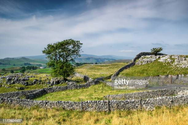 stone walls and limestone pavements in the yorkshire dales - north yorkshire stock pictures, royalty-free photos & images