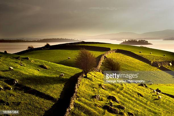 stone walls on grassy rural hillside - republic of ireland stock pictures, royalty-free photos & images