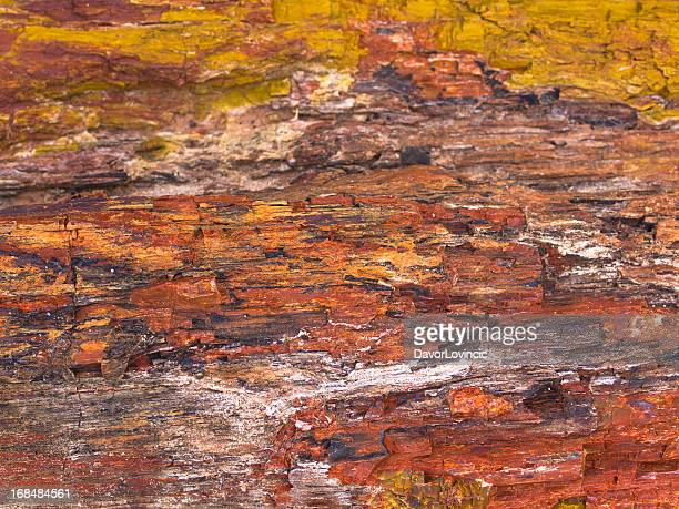 stone wood - petrified wood stock pictures, royalty-free photos & images