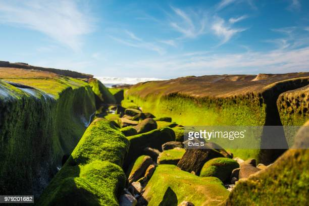 stones covered with green moss, la jolla, san diego, california, usa - la jolla stock pictures, royalty-free photos & images