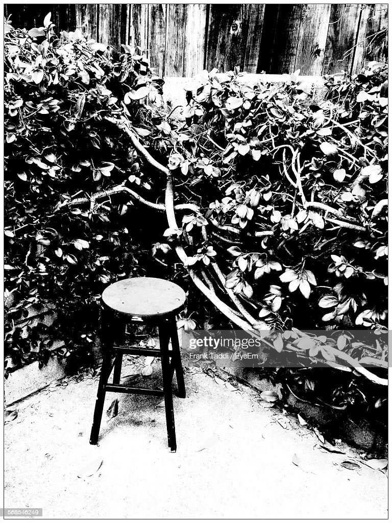 Stool By Plants In Back Yard : Stock Photo
