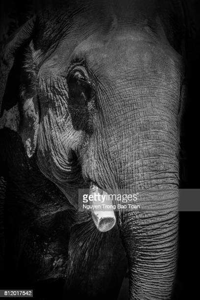 Stop the elephant ivory