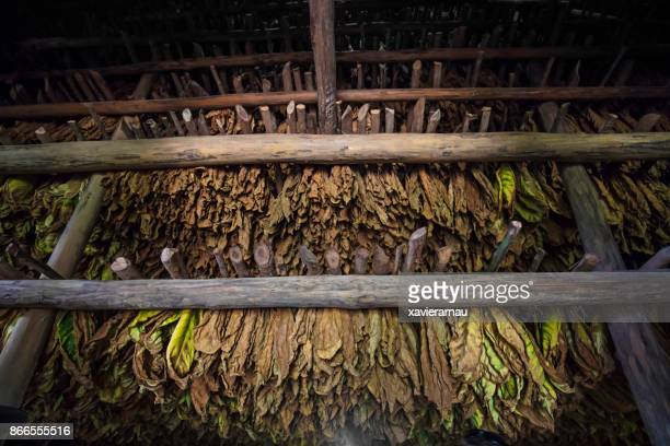 Storage barn of tobacco leaves drying in Cuba