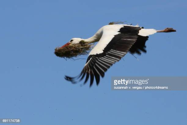 storch im flug - gras stock pictures, royalty-free photos & images