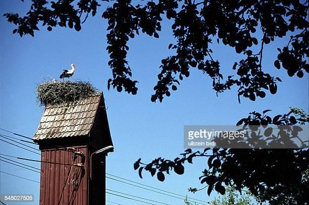 Storchennest in Schlepzig- 1999