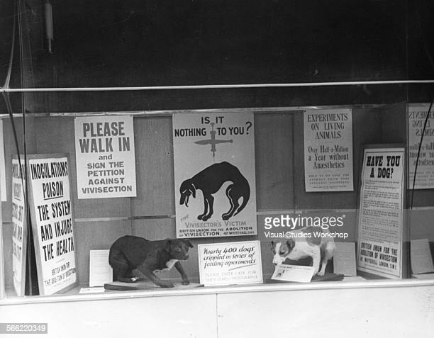 Store front promoting the petition against vivisection early to mid 20th century