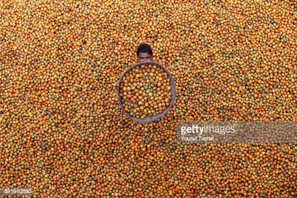 Storing Betel nut in a local market at Teknaf Bangladesh Teknaf Betel nut market is the biggest in Bangladesh