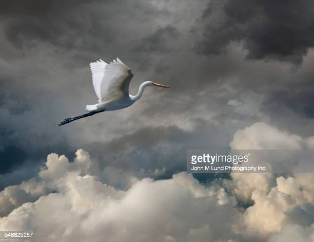 Stork flying in cloudy sky