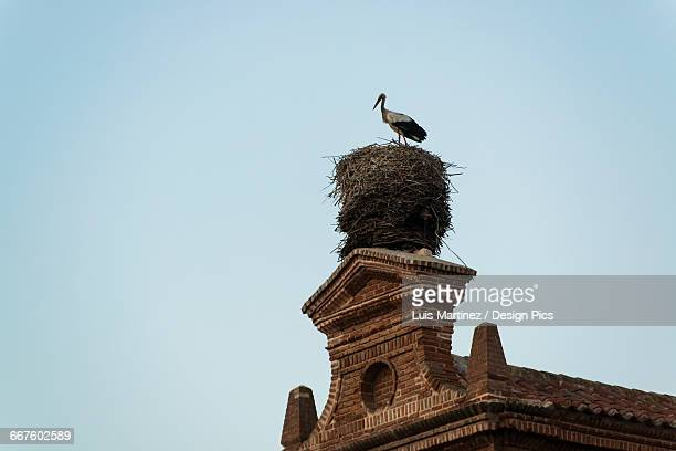 a stork in its nest on a rooftop in downtown alcala de henares, a historical and charming city near to madrid - alcala de henares stock pictures, royalty-free photos & images