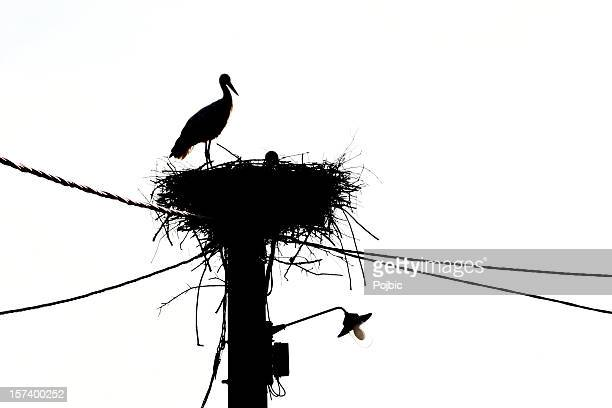 Storch in nest