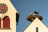 Stork Nest with a view, Germany, Europe