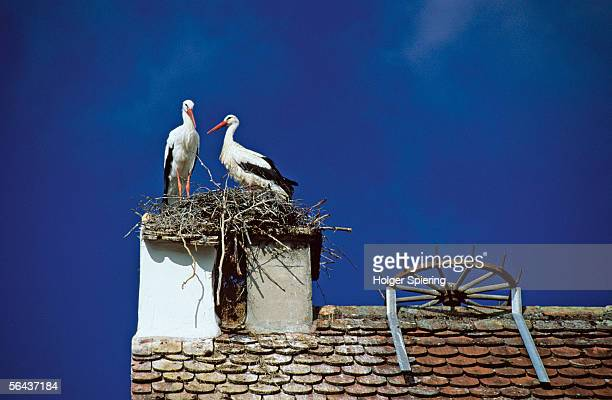Stork nesting on chimney, low angle view