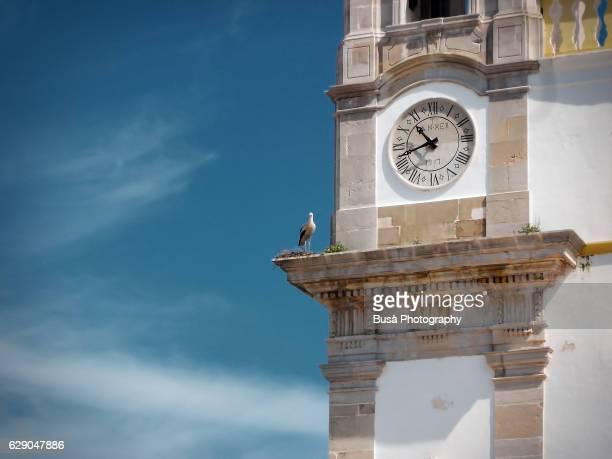 Stork nesting on the bell tower of the church of Nossa Senhora do Carmo, Faro, Algarve, Portugal