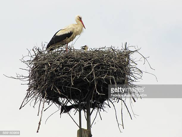 stork on nest - birds nest stock photos and pictures