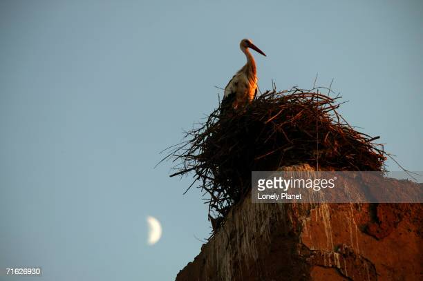 Stork on the walls of the Palais el Badi, Marrakesh, Morocco