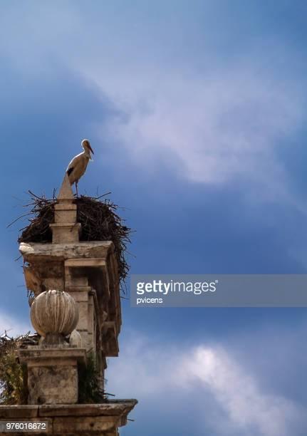 stork - alcala de henares stock pictures, royalty-free photos & images