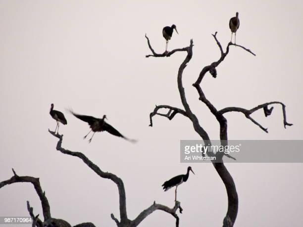 Stork Roost