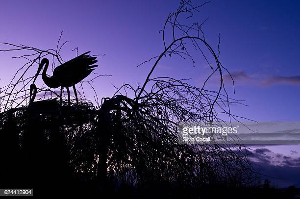 stork sculptures against a sunset winter sky - silvia casali stock pictures, royalty-free photos & images