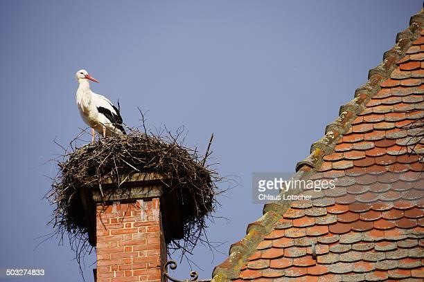 Stork sitting on nest, Catheral Munster
