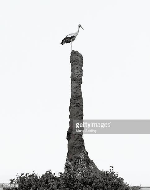 A stork standing on a very high rock.