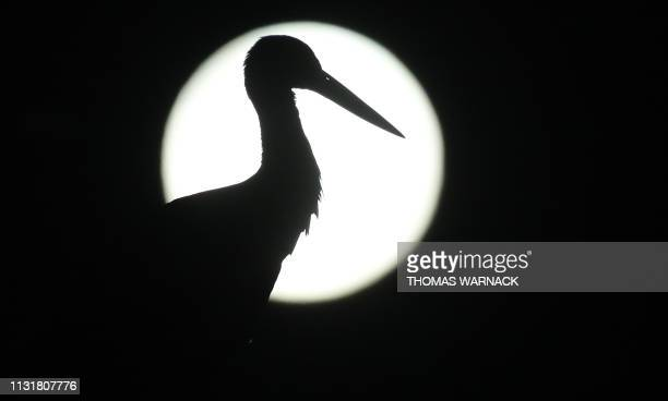 TOPSHOT A stork standing on its nest silhouettes against the full moon on early March 21 2019 in RiedlingenZell near Reutlingen southern Germany /...