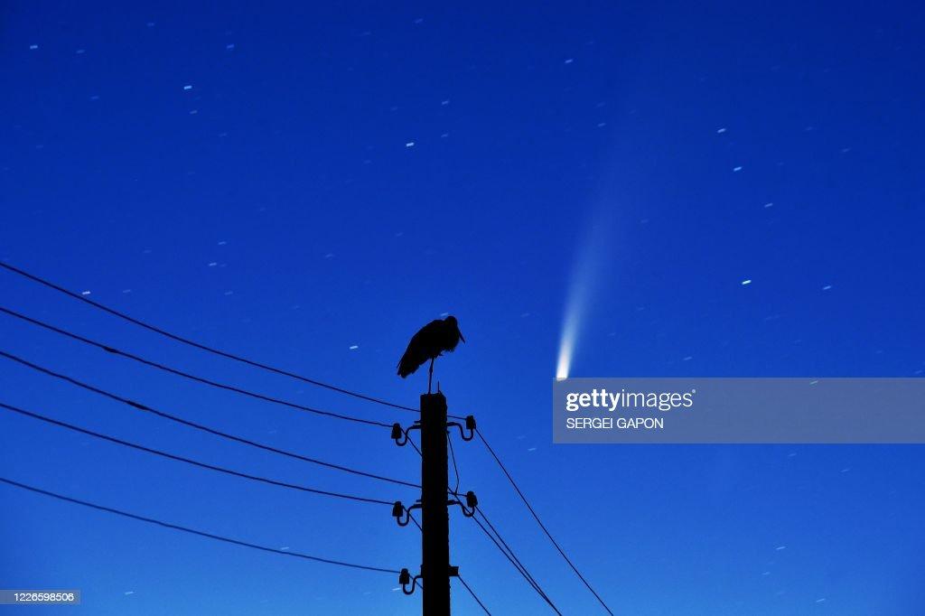 TOPSHOT-BELARUS-ASTRONOMY-ANIMAL : News Photo