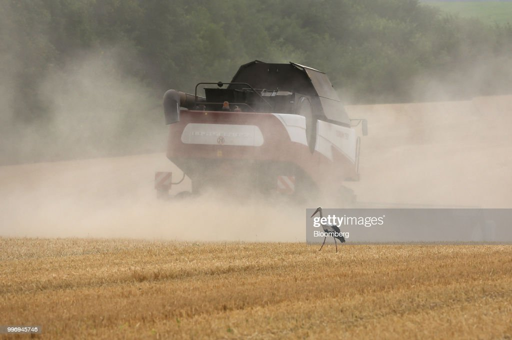 Wheat Harvest By Russian Agricultural Producer Ros Agro Plc Group