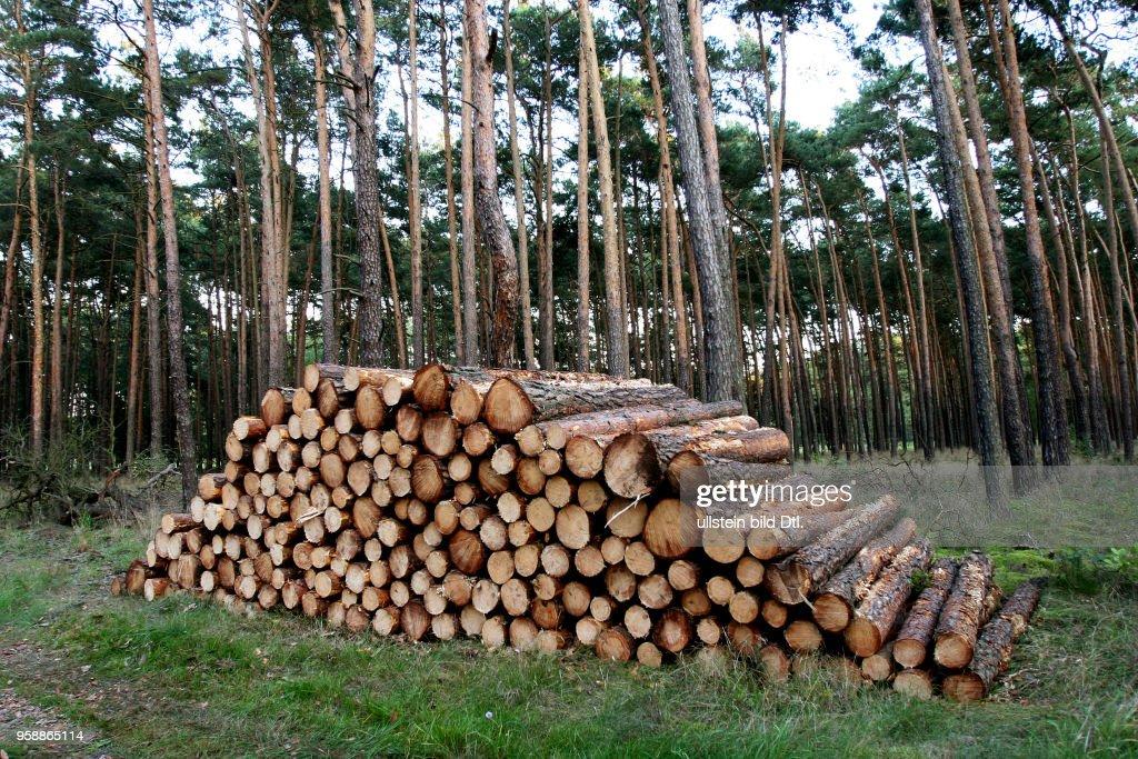 280908. Storkow, Brandenburg, Deutschland - Gestapeltes Holz. Heizen ...