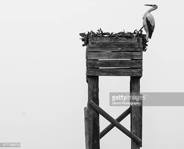 storks come from paris - provinz lerida stock-fotos und bilder