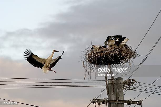 Storks Eastern Europe The storks migratory birds also build nests in cities and villages They can be carrying the virus H5N1 which is at the origin...