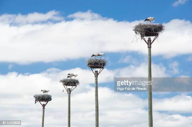 Storks- Nest- Navarre- Tudela- Spain
