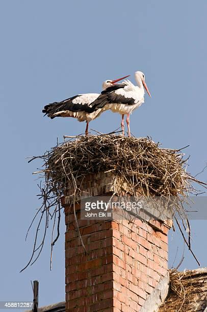 Storks nesting on house chimmney